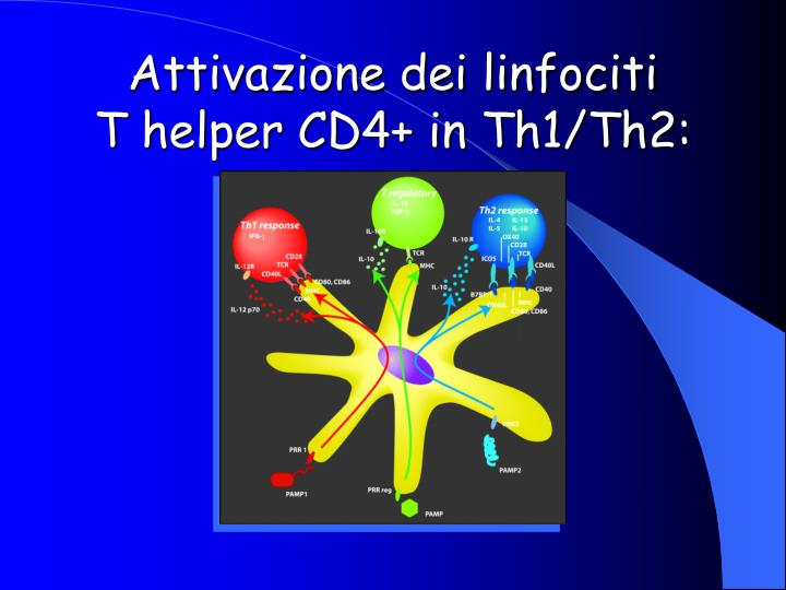 Attivazione dei linfociti