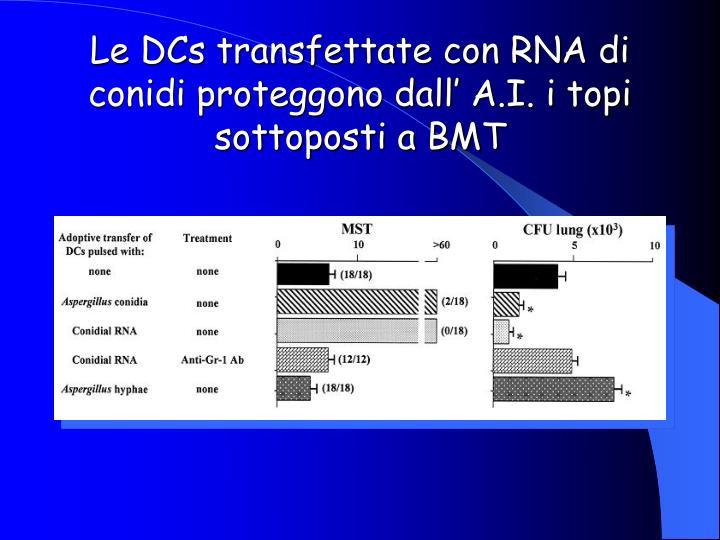 Le DCs transfettate con RNA di conidi proteggono dall' A.I. i topi sottoposti a BMT