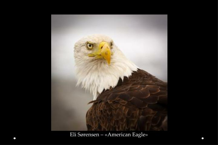 Eli Sørensen – «American Eagle»