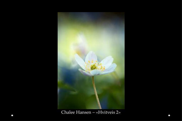 Chalee Hansen – «Hvitveis 2»