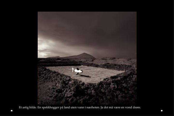 Et artig bilde. En spekkhogger på land uten vann i nærheten. Ja det må være en vond drøm.