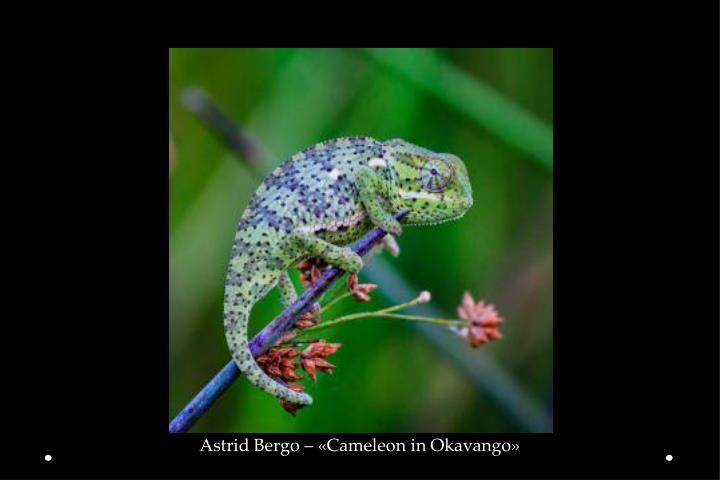 Astrid Bergo – «Cameleon in Okavango»