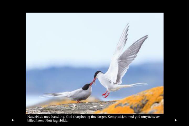 Naturbilde med handling. God skarphet og fine farger. Komposisjon med god utnyttelse av billedflaten. Flott fuglebilde.