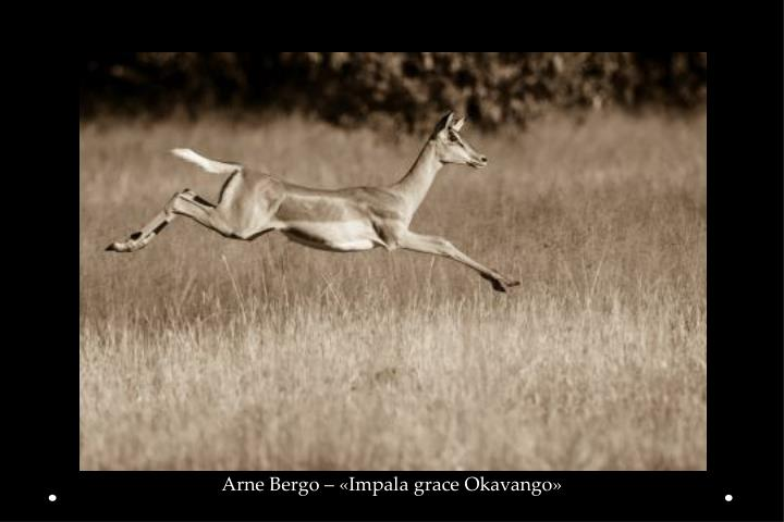 Arne Bergo – «Impala grace Okavango»