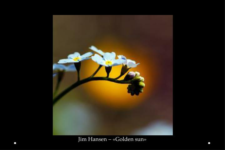 Jim Hansen – «Golden sun»
