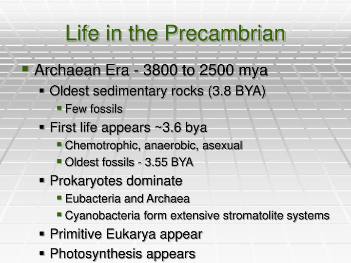 Life in the Precambrian