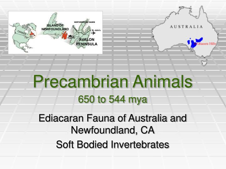 Precambrian Animals
