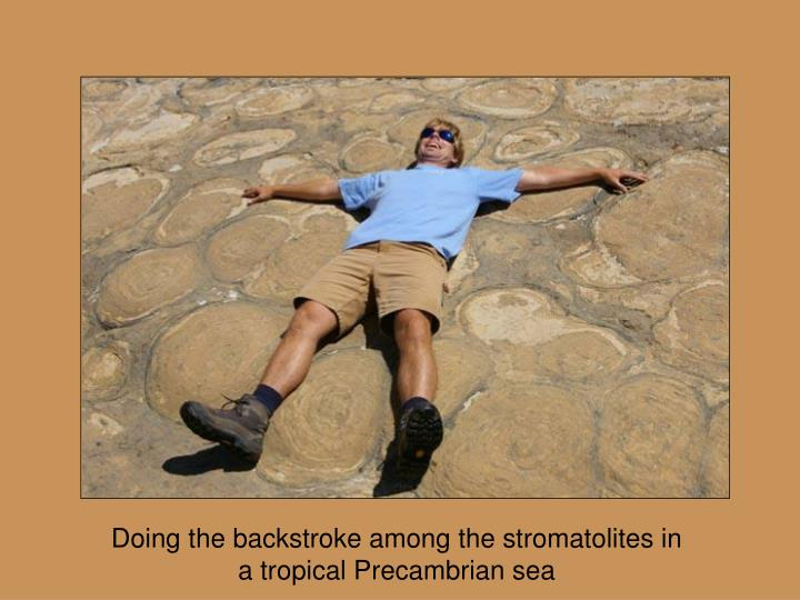 Doing the backstroke among the stromatolites in a tropical Precambrian sea