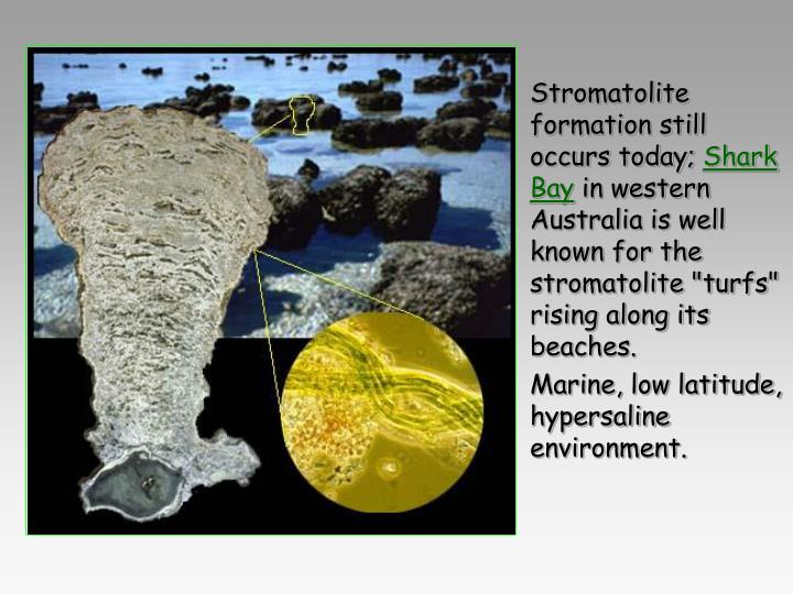 Stromatolite formation still occurs today;