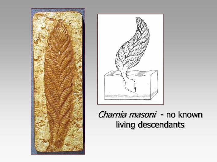 Charnia masoni
