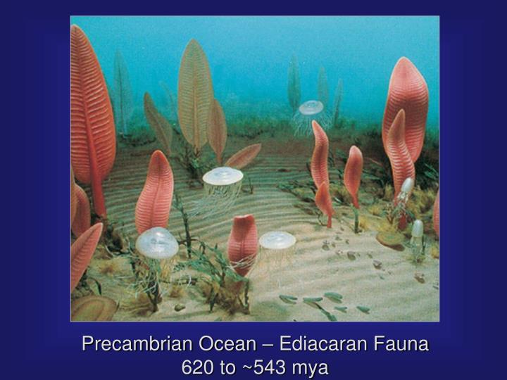 Precambrian Ocean – Ediacaran Fauna 620 to ~543 mya