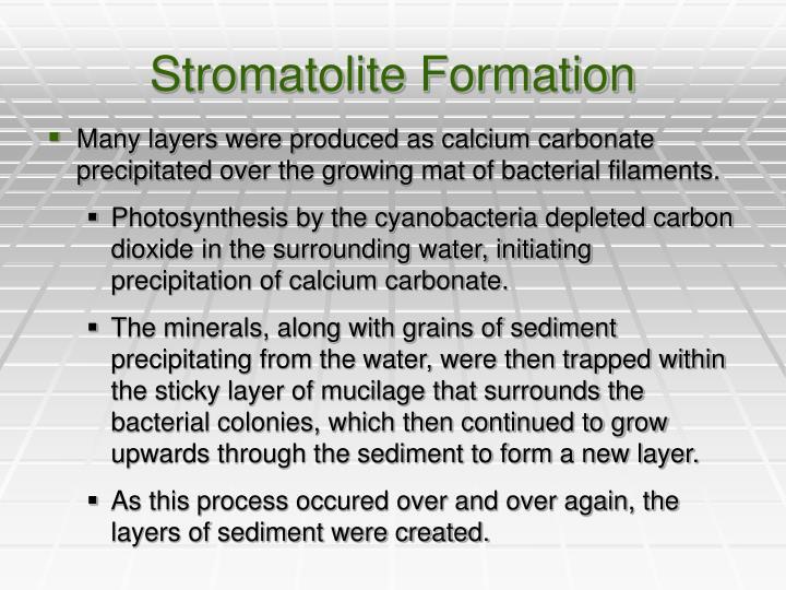Stromatolite Formation