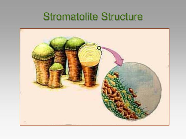 Stromatolite Structure