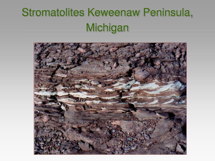 Stromatolites Keweenaw Peninsula, Michigan