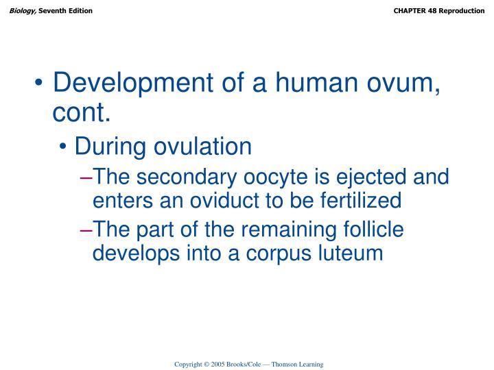 Development of a human ovum, cont.