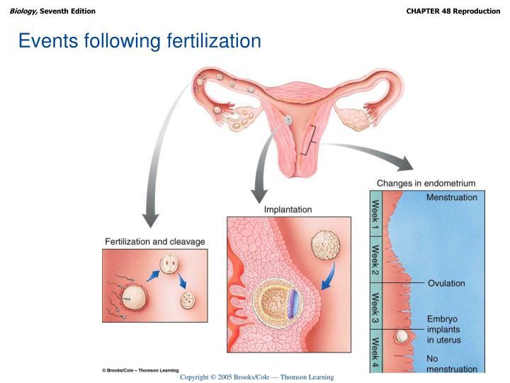 Events following fertilization