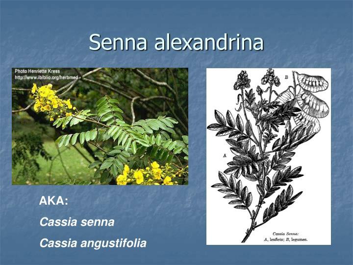 Senna alexandrina