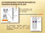 os cromossomas possuem milhares de pequenos segmentos de adn