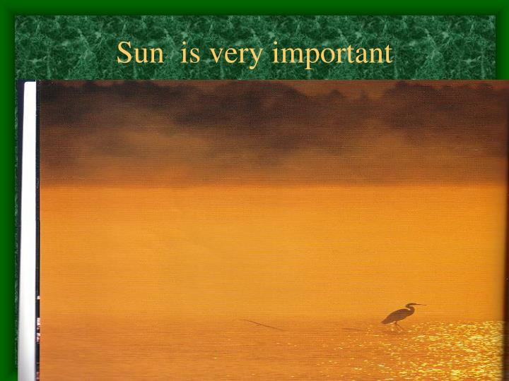 Sun  is very important