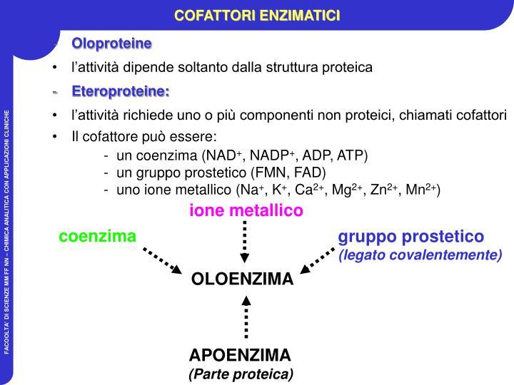 coenzima