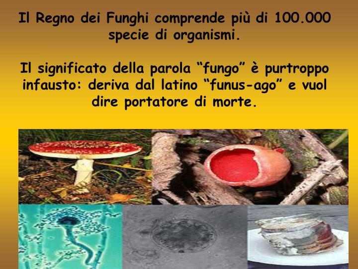 Il Regno dei Funghi comprende più di 100.000 specie di organismi.