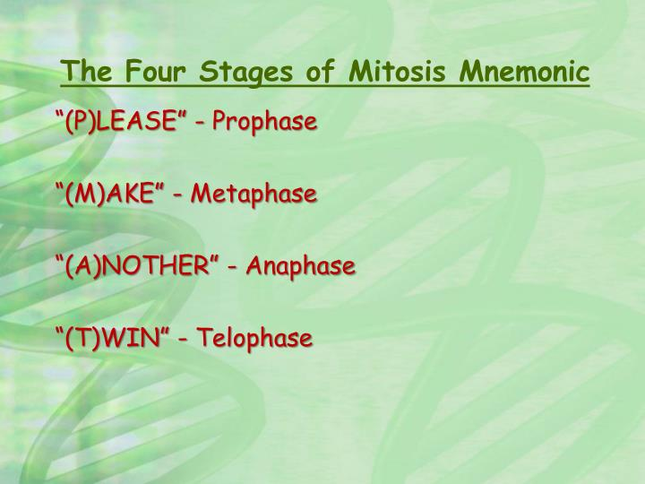 The Four Stages of Mitosis Mnemonic