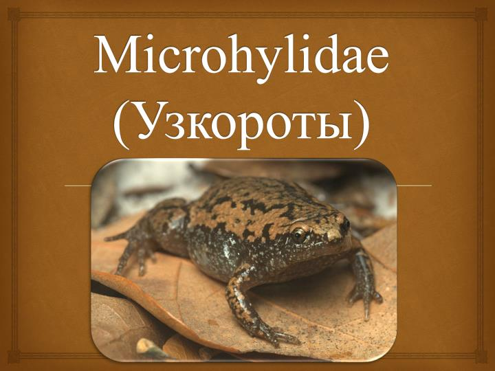 Microhylidae