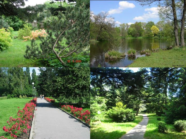 People say that there are three botanical gardens in Kaliningrad. There are: the town itself, the