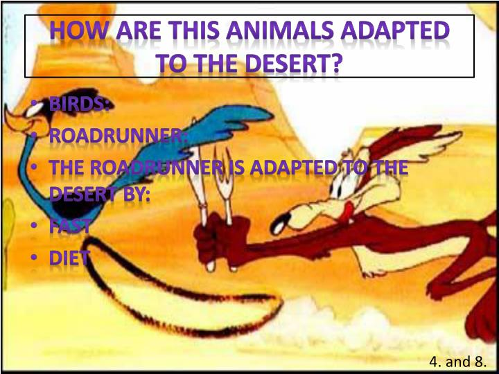 How are this animals adapted to the desert?
