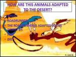 how are this animals adapted to the desert