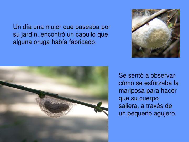 Un día una mujer que paseaba por su jardín, encontró un capullo que alguna oruga había fabricado.