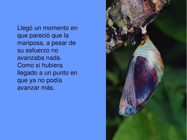 Llegó un momento en que pareció que la mariposa, a pesar de su esfuerzo no avanzaba nada. Como si hubiera llegado a un punto en que ya no podía avanzar más.