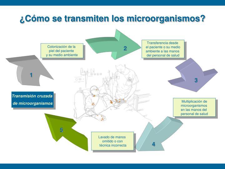¿Cómo se transmiten los microorganismos?
