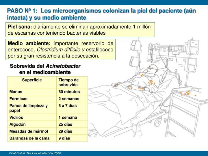 PASO Nº 1:  Los microorganismos colonizan la piel del paciente (aún intacta) y su medio ambiente