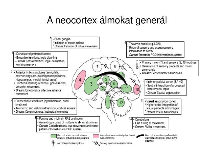A neocortex álmokat generál