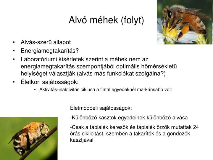 Alvó méhek (folyt)