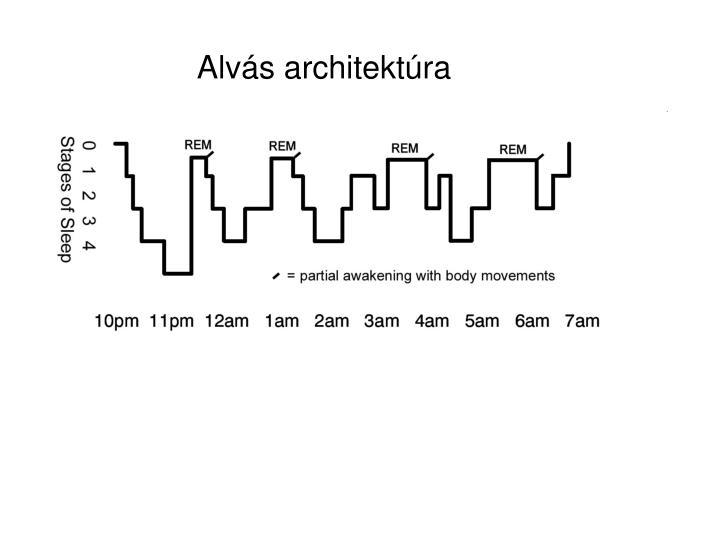 Alvás architektúra