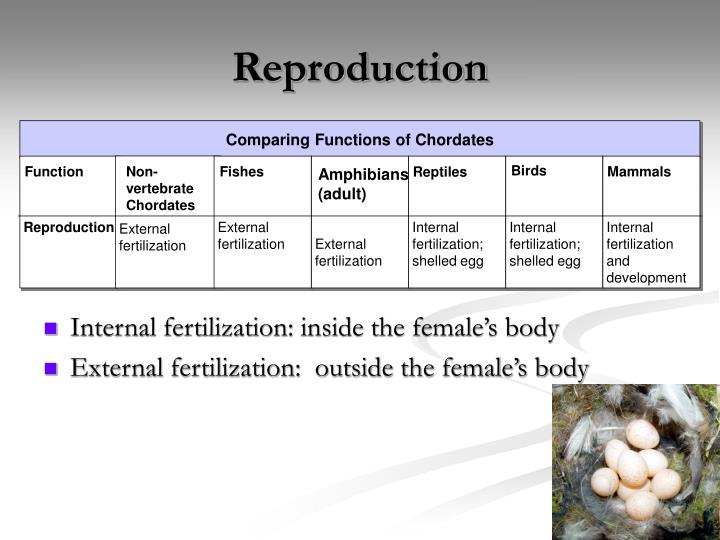 Internal fertilization: inside the female's body