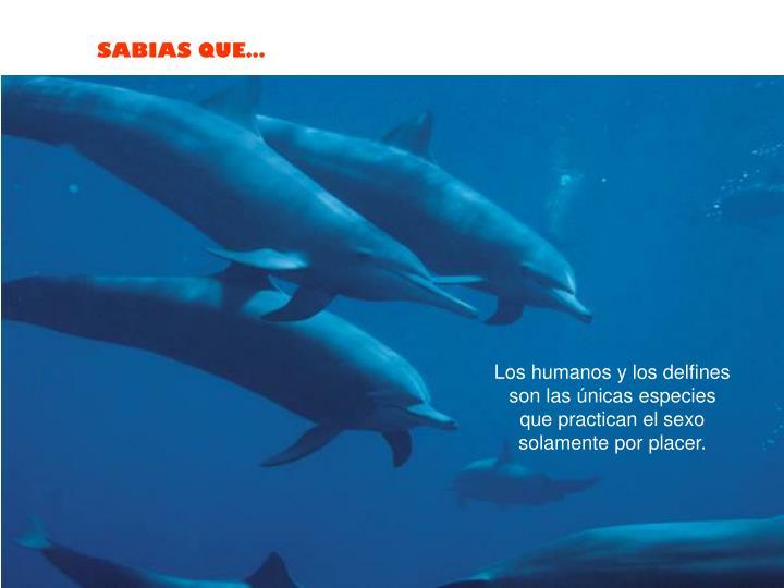 Los humanos y los delfines