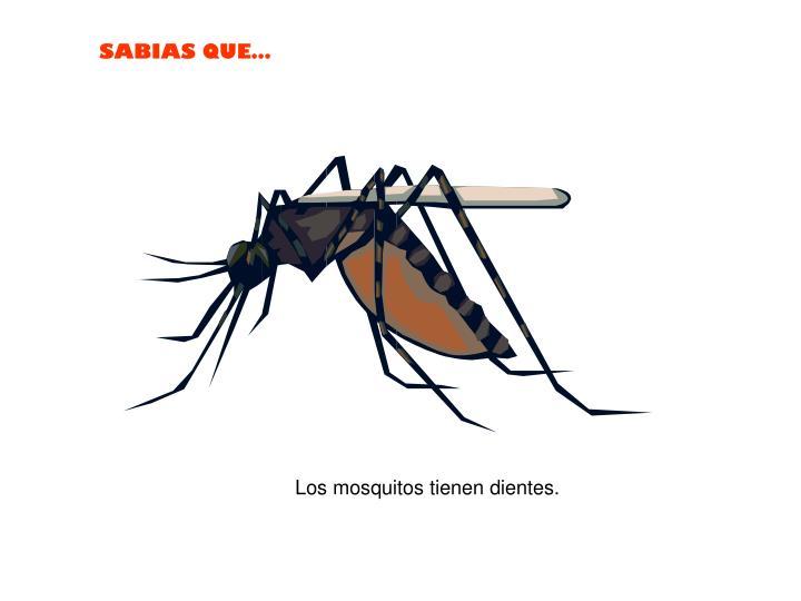 Los mosquitos tienen dientes.