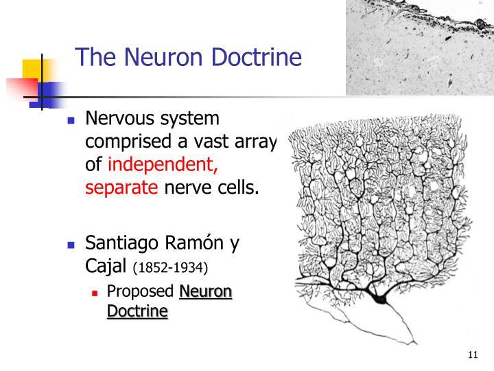 The Neuron Doctrine