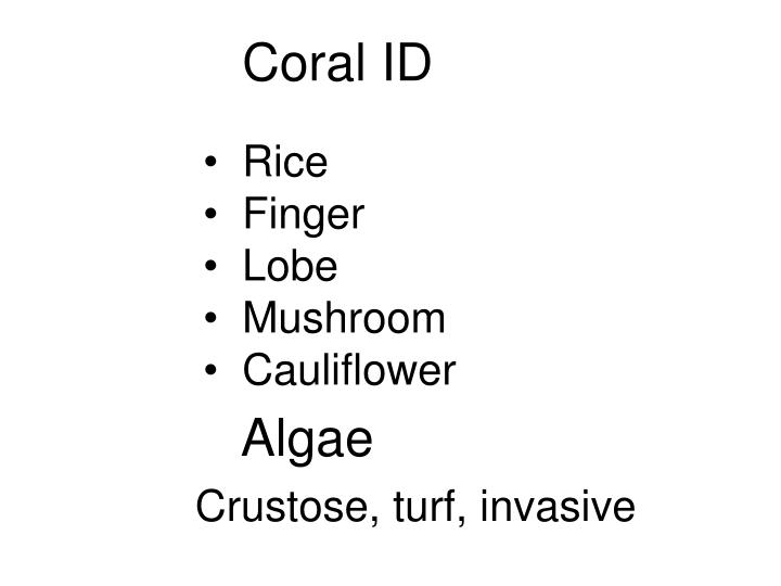 Coral ID