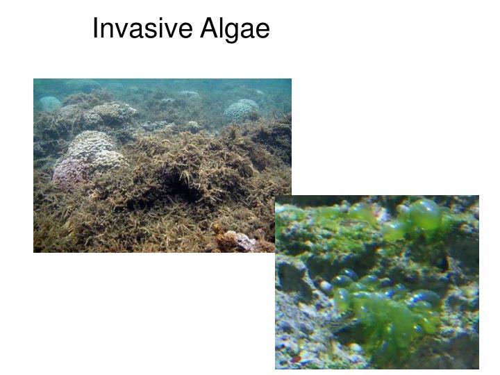 Invasive Algae