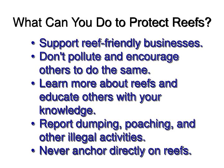 What Can You Do to Protect Reefs?