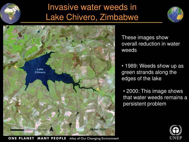 Invasive water weeds in