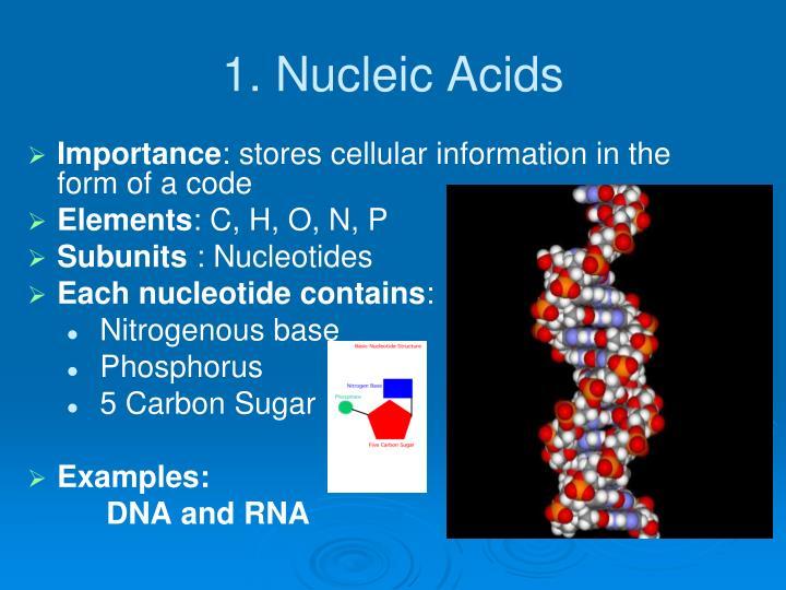 1. Nucleic Acids
