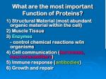 what are the most important function of proteins