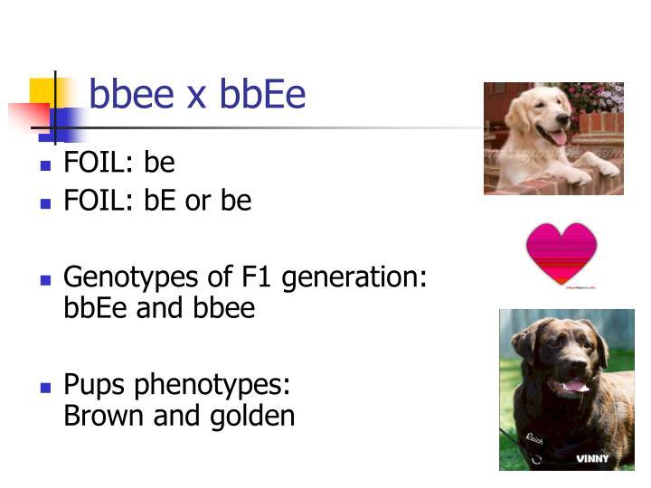 bbee x bbEe