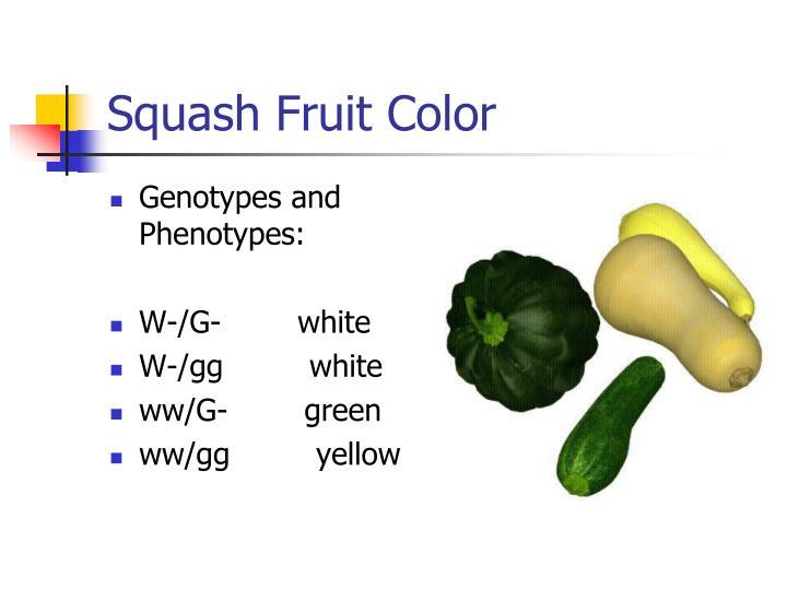 Squash Fruit Color