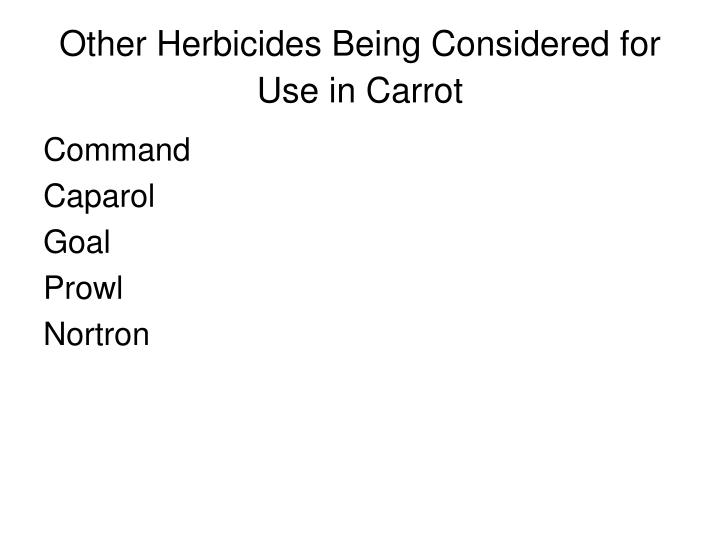 Other herbicides being considered for use in carrot